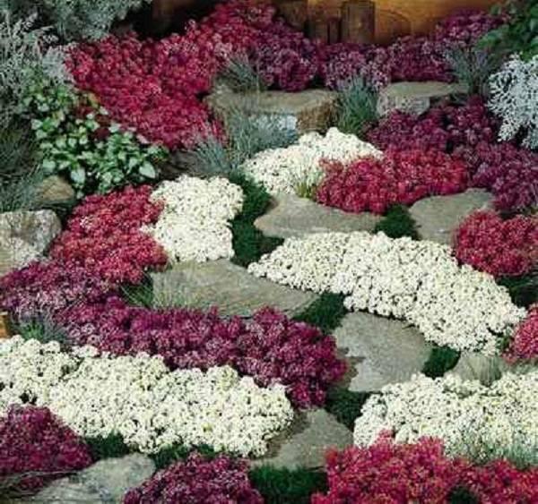 Чем хороши почвопокровные многолетники? | сажаем сад