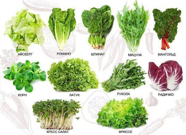 Кресс-салат: вред и польза, пищевая ценность, калорийность - общая информация - 2020