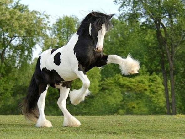 Мустанги — свободные лошади диких прерий