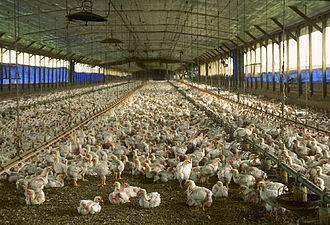 Открытие молочной фермы за 9 шагов