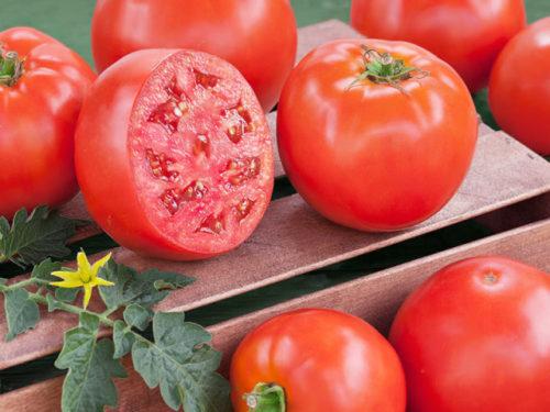 Лучшая схема подкормки томатов в теплице и открытом грунте. используйте эту таблицу весь сезон!