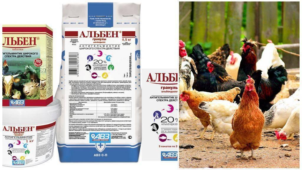 Альбен (таблетки): инструкция по применению в ветеринарии для кур. альбен от глистов ветеринария таблетки альбен