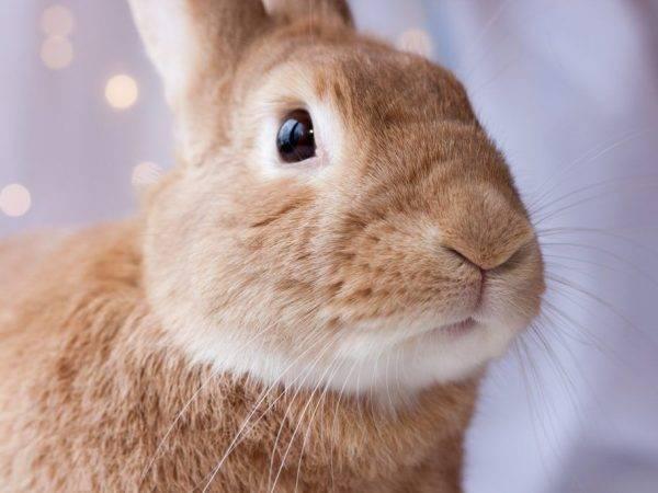 Болезни кроликов: виды, симптомы, профилактика и особенности лечения