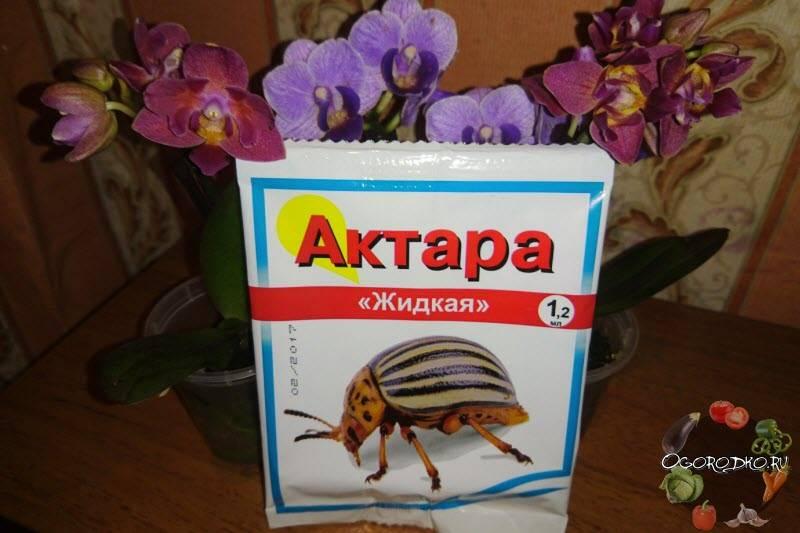 Актара - инструкция по применению для картофеля, действие инсектицида