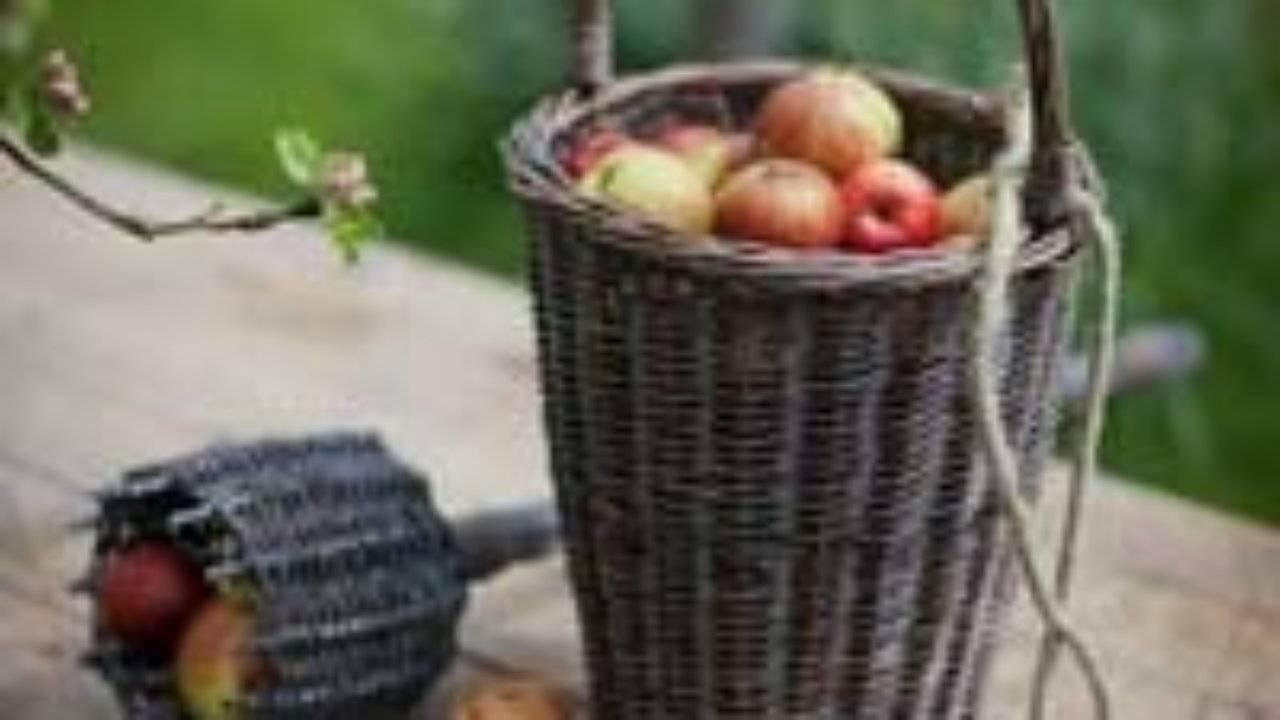 Самодельный плодосъемник с быстросменными насадками