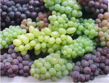 Сорта винограда на у, ф