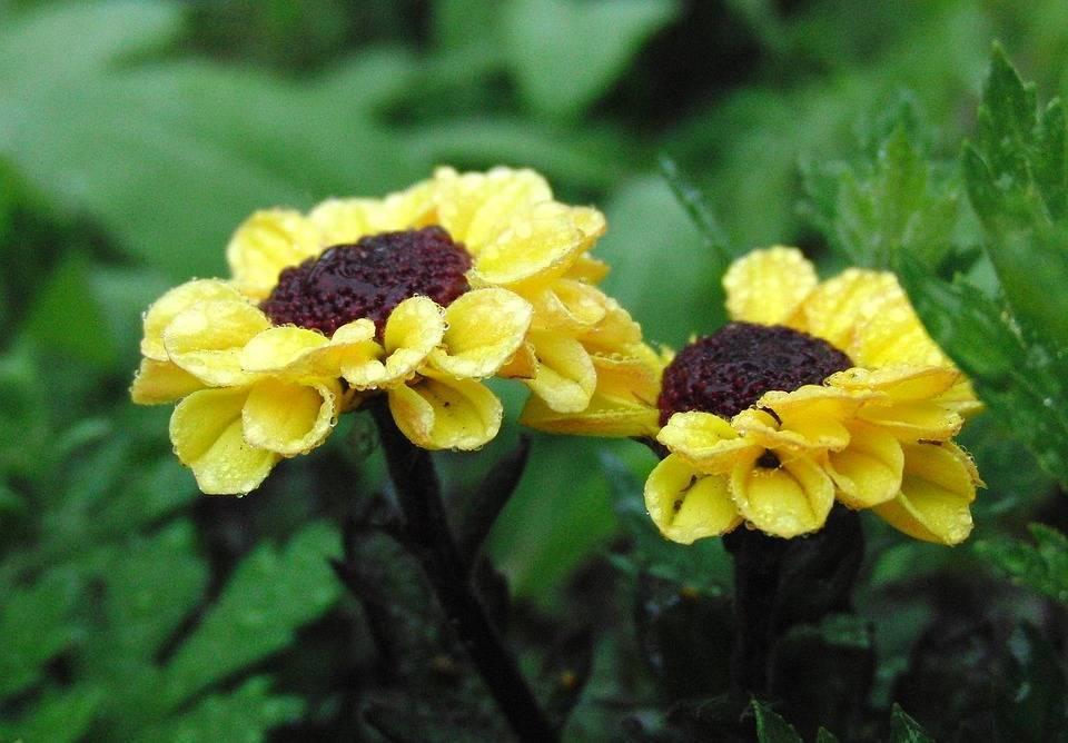 Однолетние цветы: названия, фото и описание сортов и видов