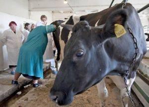 Статьи по разведению крс на korovainfo.ru | искусственное осеменение коров