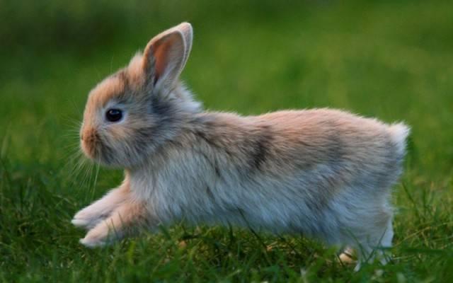 Как правильно разделать кролика на порционные куски: советы, видео
