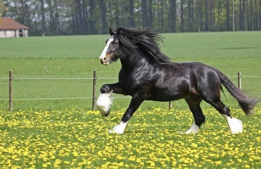 Список и описания 40 самых лучших пород лошадей, характеристики и названия