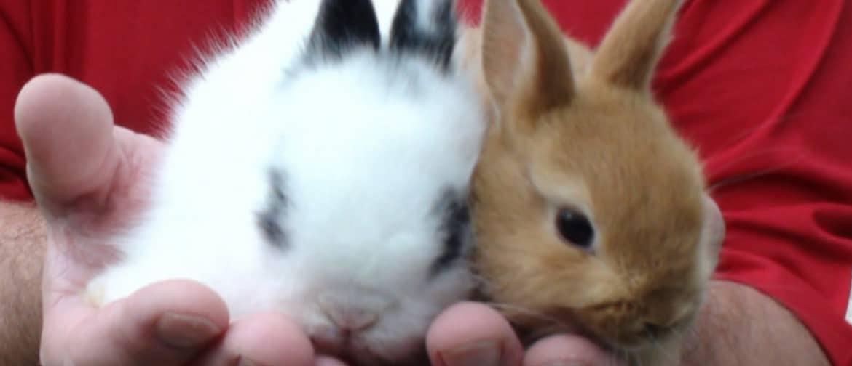 Можно ли купать кролика? нужно ли мыть декоративного и обычного кролика? как правильно искупать в домашних условиях? умеют ли кролики плавать?