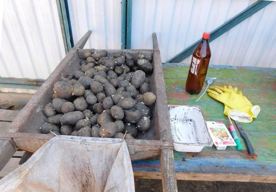 Предпосадочная защита картофеля от вредителей: советы и секреты