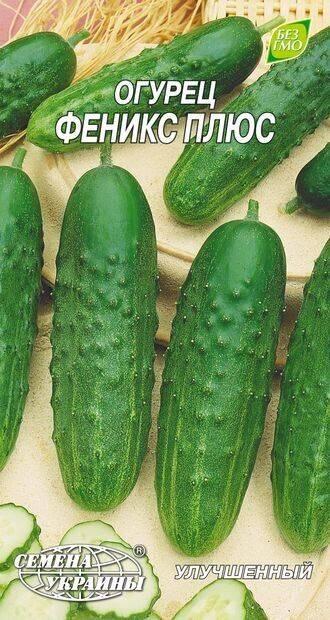 Огурец феникс - 95 фото особенностей сорта и основные проблемы при его выращивании