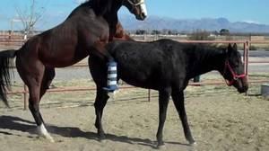 Все, что вы хотели знать о разведении лошадей