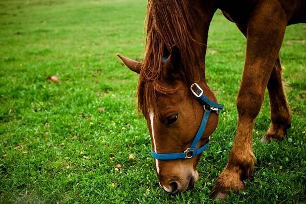 Болезни лошадей симптомы и лечение