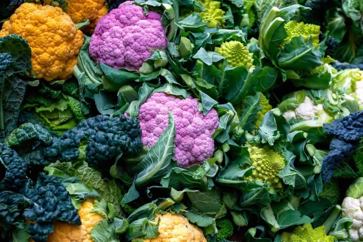 Сорта капусты: фото и названия