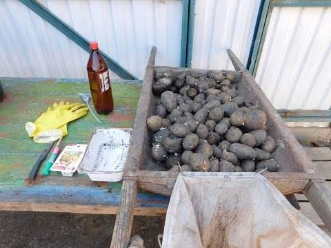 Чем обработать картофель и корнеплоды перед  хранением (периоды, условия, способы обработки, препараты)