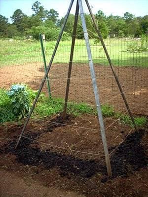 Как и когда сажать фасоль весной в открытый грунт