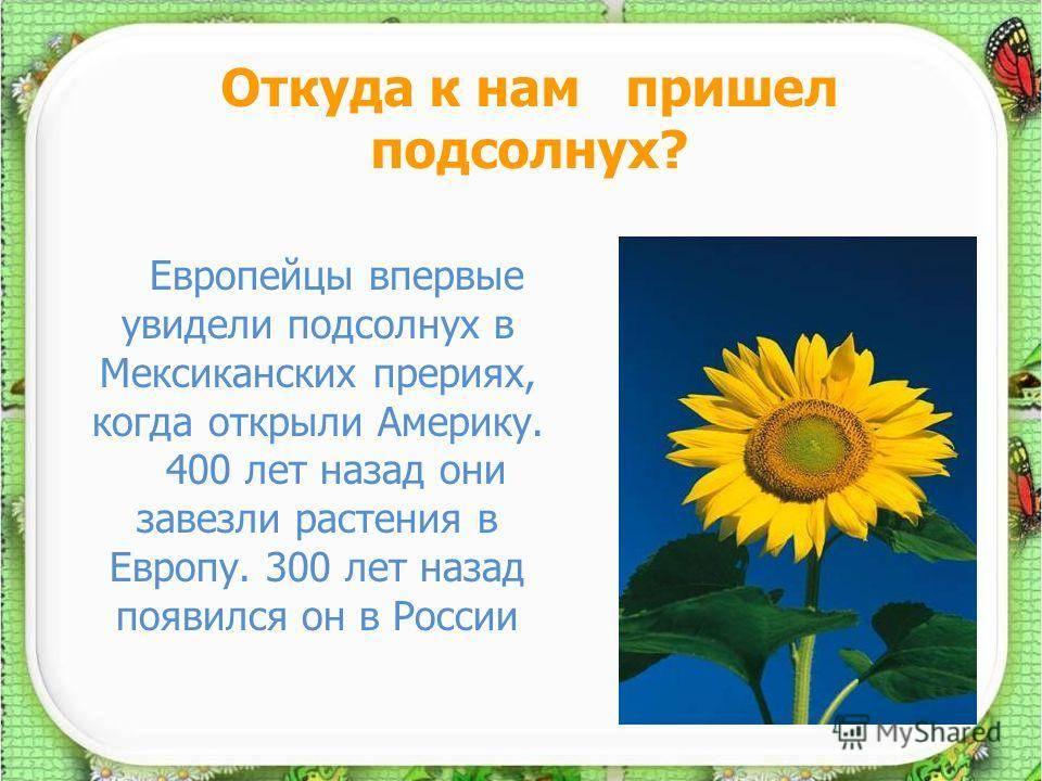 Питание подсолнечника и особенности применения органических удобрений