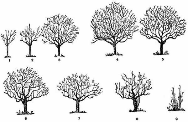 Что такое период вегетации растений и как его определить - садовые цветы, растения и кустарники - 2020