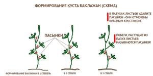 Правила формирования баклажан в теплице: видео и 5 условий