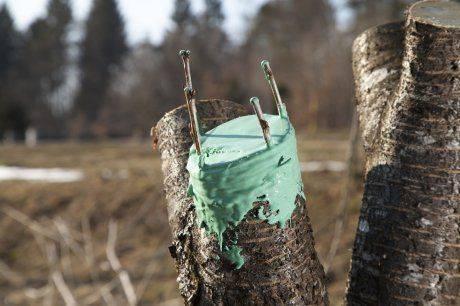 О прививке плодовых деревьев весной и летом: советы начинающим садоводам