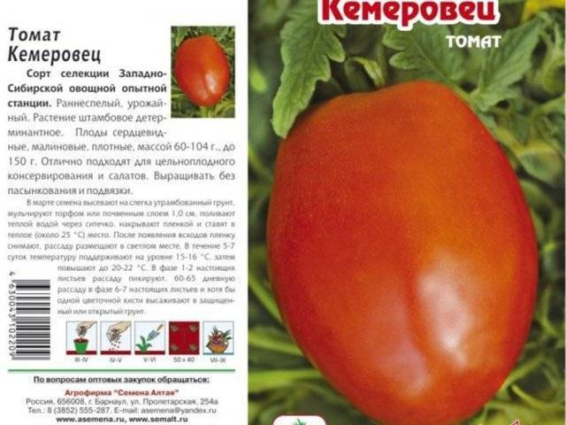 Посадка томатов на рассаду