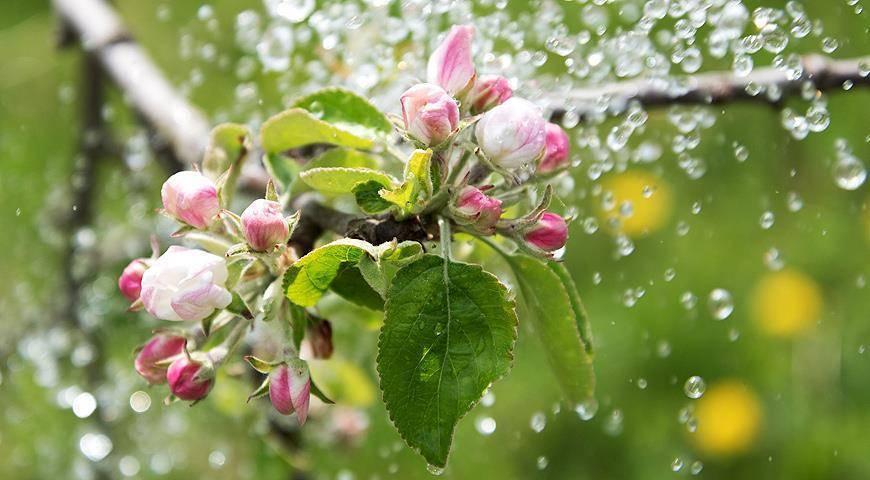Правила полива деревьев от саженца до взрослого дерева
