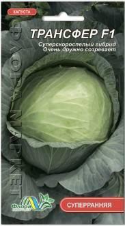 Особенности выращивания ранней белокочанной капусты в россии