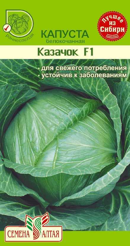 Ранние сорта капусты: названия и сроки, когда сеять семена лучших белокочанных гибридов f1: пандион, сир, кевин и других, а также описание выращивания рассады