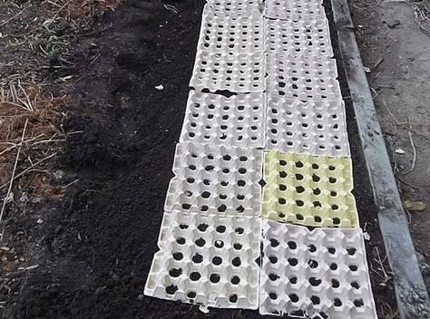 Способы выращивания редиса: на туалетной бумаге, кассетах, гидропонной установке