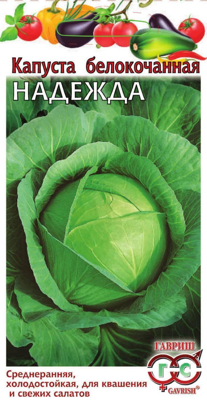 Капуста белорусская 455, 85: описание сорта, фото, отзывы, посадка и уход, выращивание