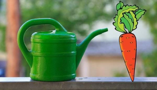 Полив моркови: как часто можно увлажнять в открытом грунте, после посадки и всходов, нужно ли это в дождь, сколько воды надо овощу в жару летом, например, в июле?