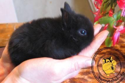 Какие и когда прививки делать домашним кроликам