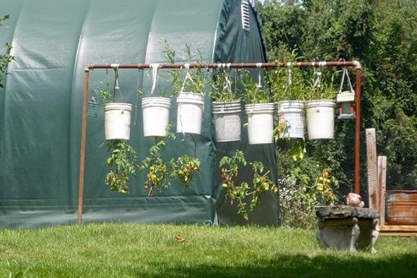 Помидоры в ведрах, выращивание вниз головой: плюсы и минусы посадки томатов вверх тормашками, фото, а также как просверлить дно и можно ли ждать урожая?