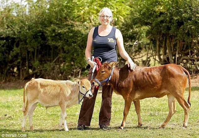 Молочные породы коров (56 фото): самые высокоудойные коровы молочного направления в россии и в мире. как выбрать лучшую породу крупного рогатого скота?