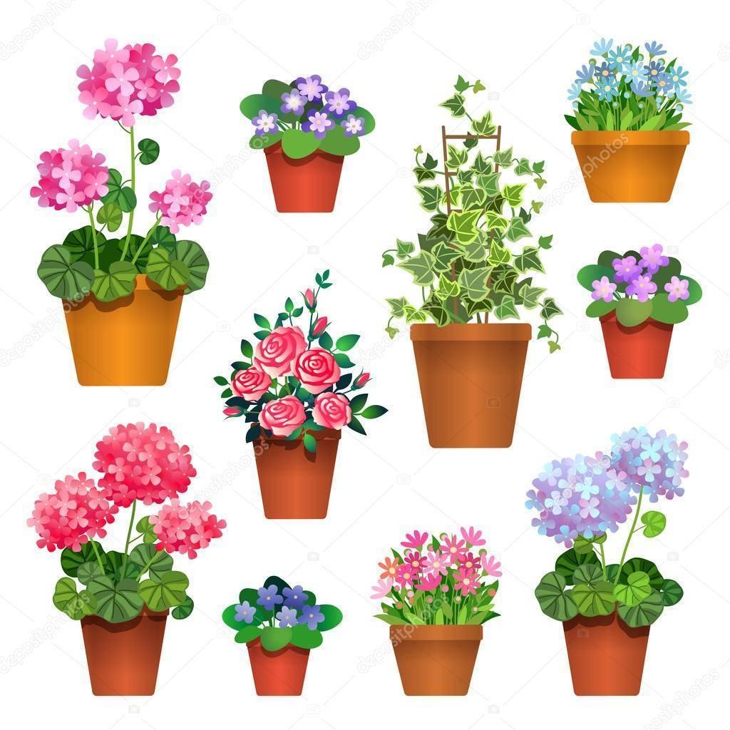 О цветах в горшках: выращивание домашнего цветка с фиолетовыми листьями