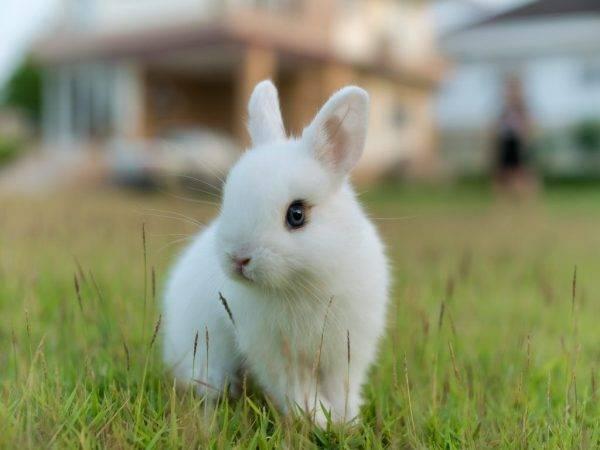 Лучшие породы кроликов