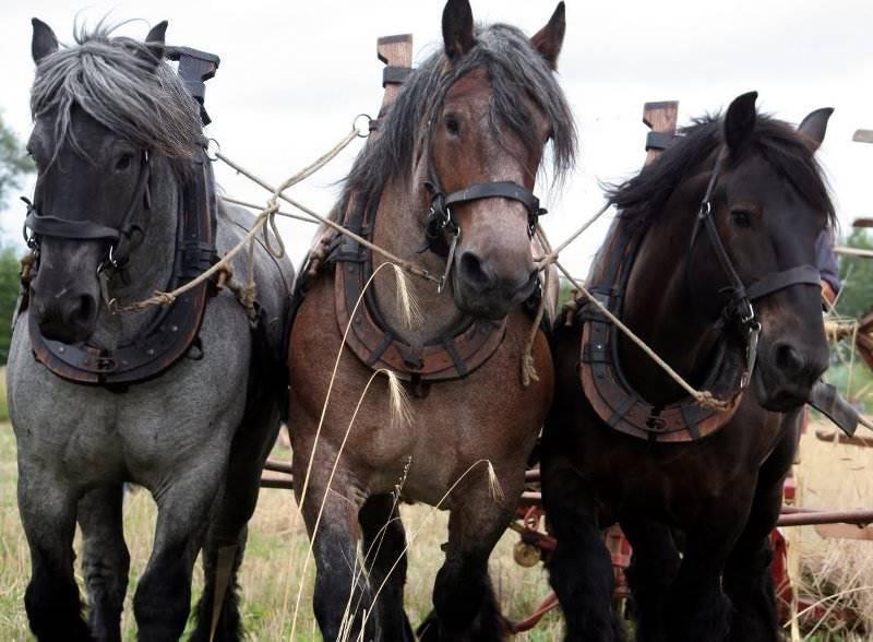 Сколько весят лошади?