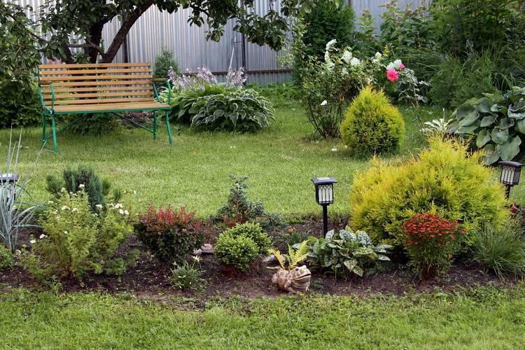 Хвойники в ландшафтном дизайне (55 фото): выбираем хвойные для дачного участка и составляем композиции с голубой елью и лиственными