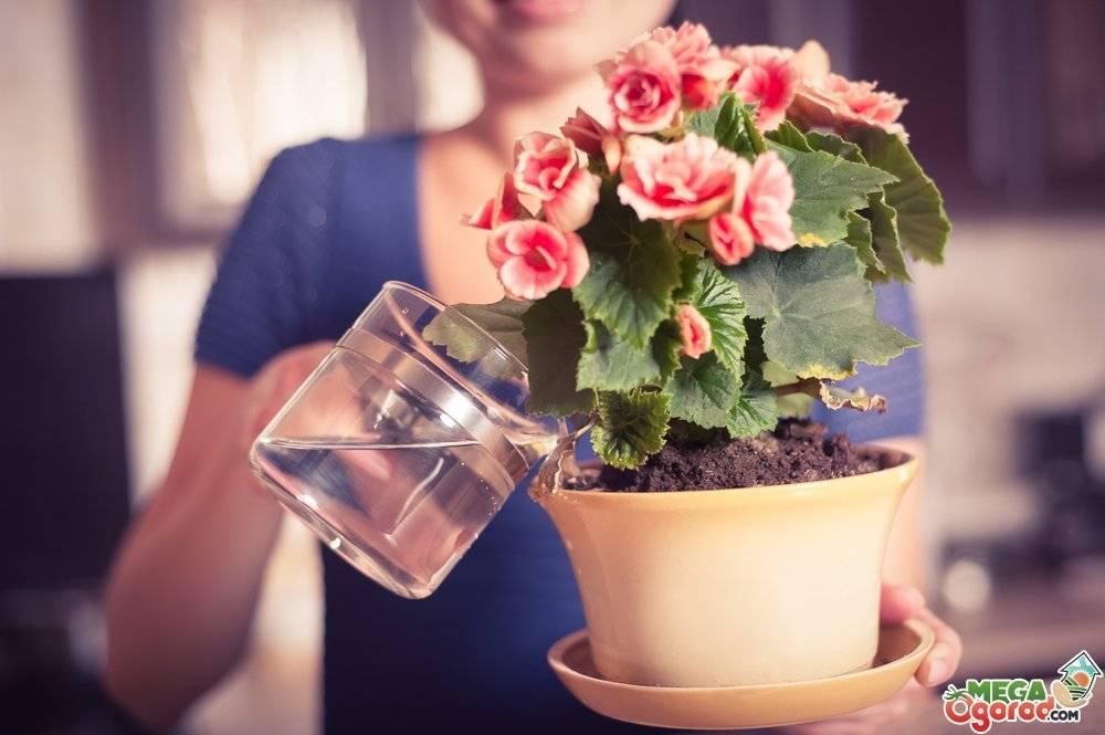 Чем поливать комнатные цветы для быстрого роста и обильного цветения