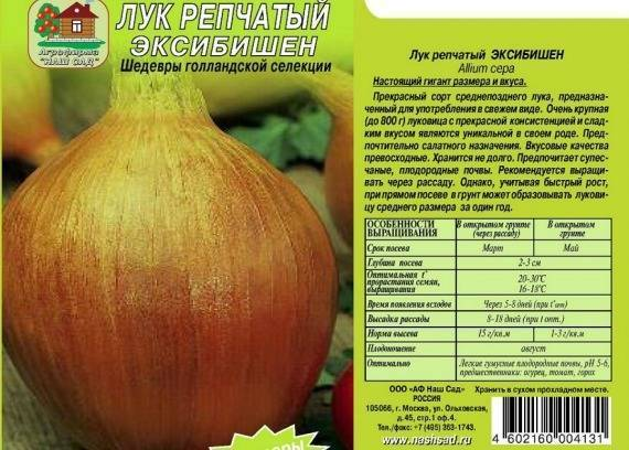 Как вырастить лук эксибишен из семян