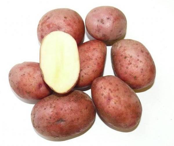 Любава: описание семенного сорта картофеля, характеристики, агротехника