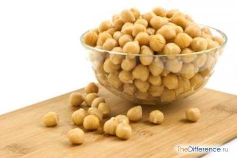Польза бобовых культур для здоровья. разница между бобами и фасолью