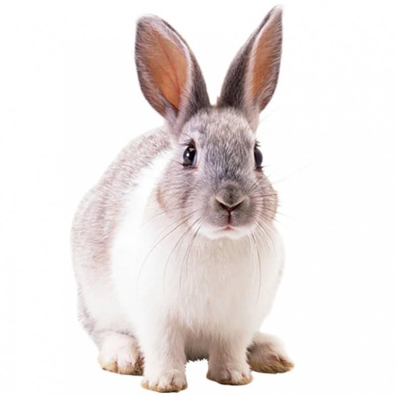 Как кормить кроликов гранулированными кормами