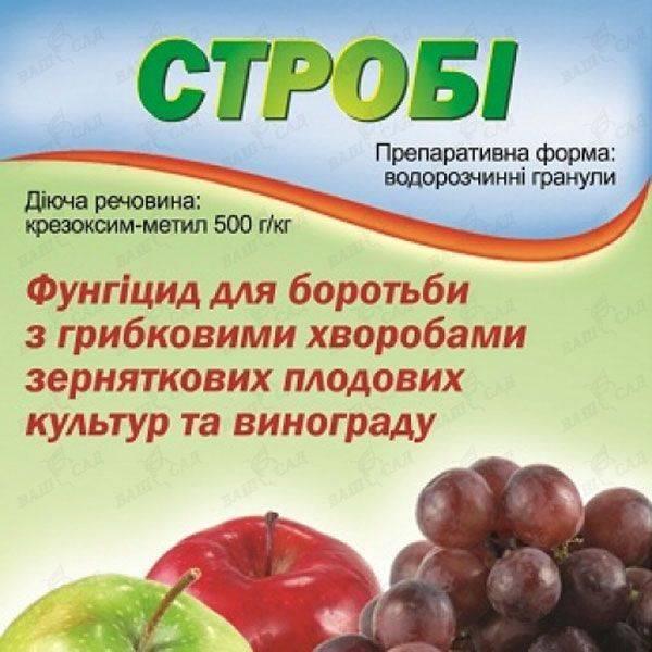 Инструкция по применению фунгицида «строби» для обработки винограда и срок ожидания