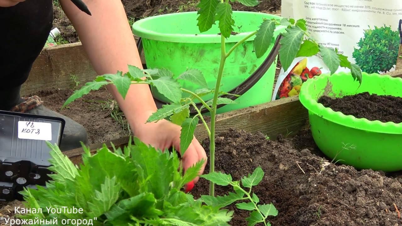 Какие удобрения можно вносить при посадке помидоров?