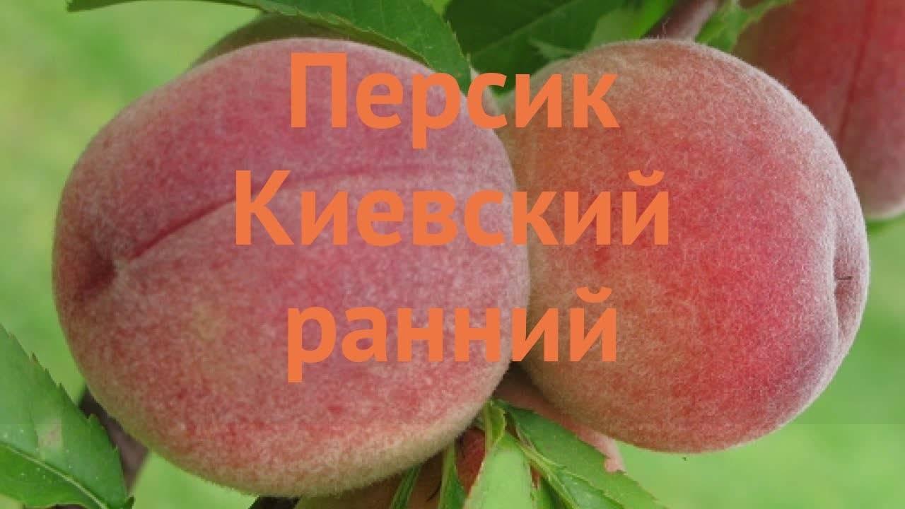 Посадка саженца персикового дерева осенью