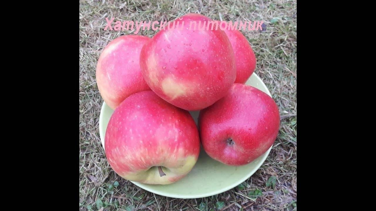 50 фото и описание яблони «хани крисп»,  посадка, уход, ее полезные свойства и противопоказания