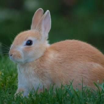 Как понять своего кролика - wikihow